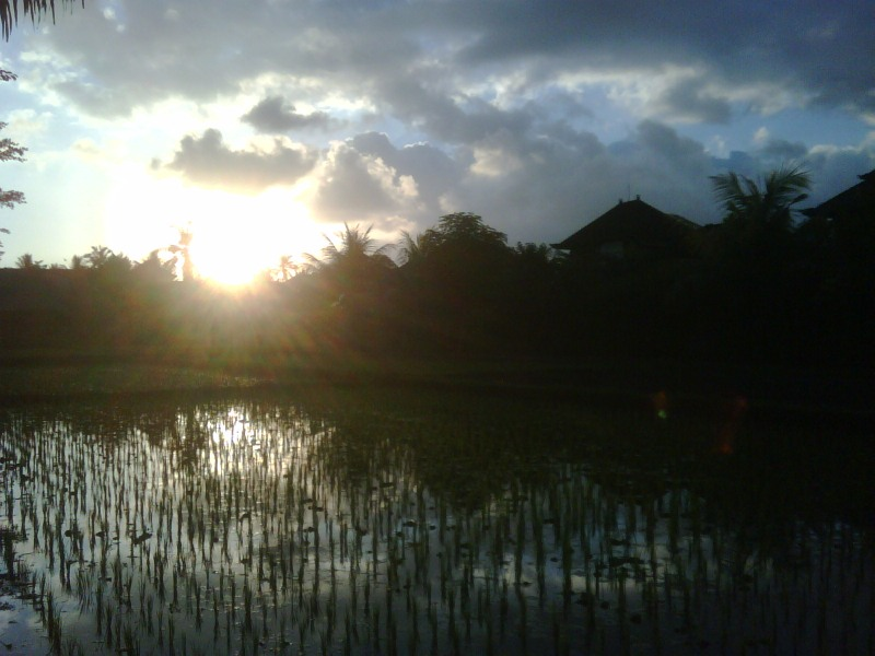 There are spirits in the paddy field.