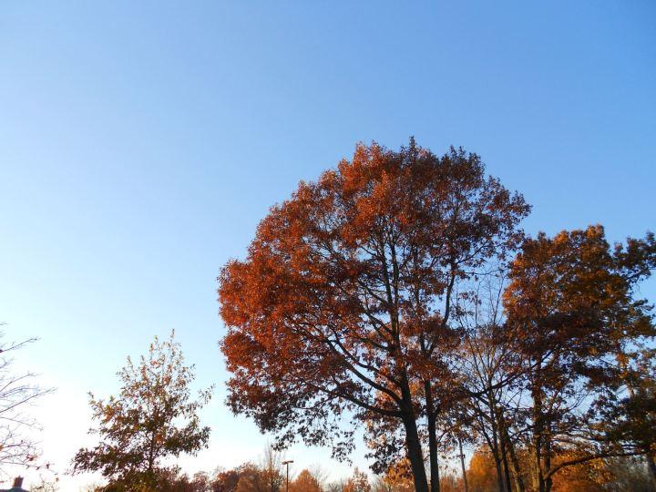 Fine Fall